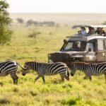 Safari Nedir Nasıl Yapılır?