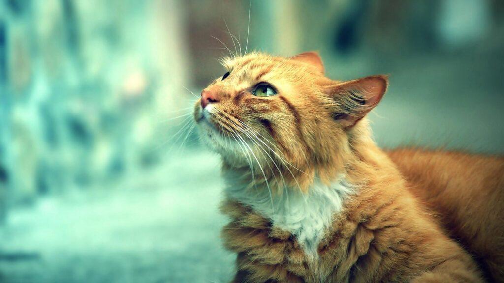 Kaybolan Kedi Nasıl Bulunur