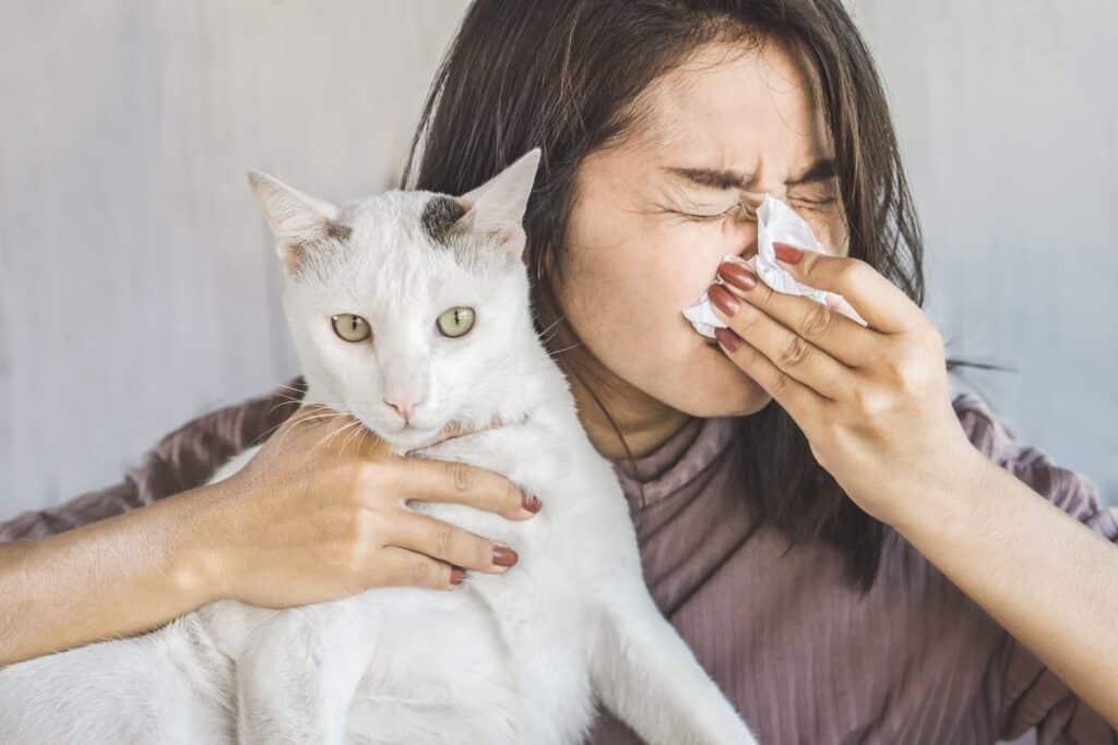 Kedi Alerjisi Nasıl Olur?